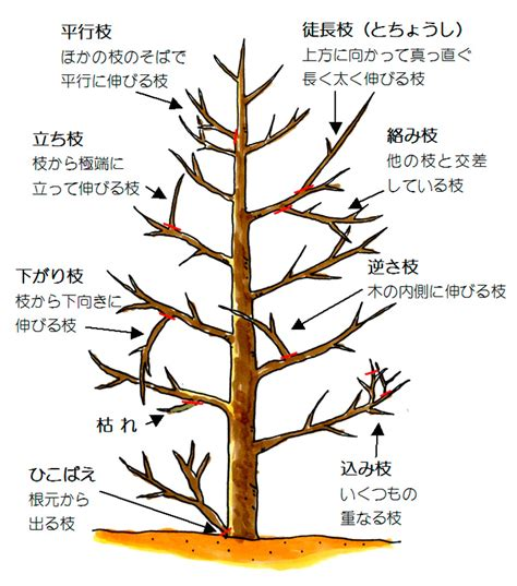 Images of 剪定 - JapaneseClass