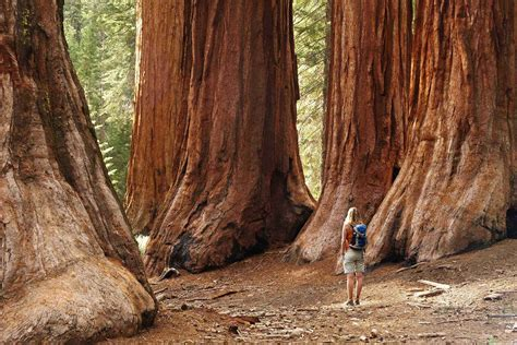 The Planet's Most Amazing Trees and Where to Find Them